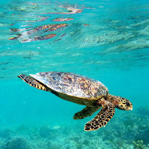 Snorkeling & plongée